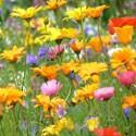 Engrais Fleurs