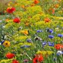 Gazons fleurs